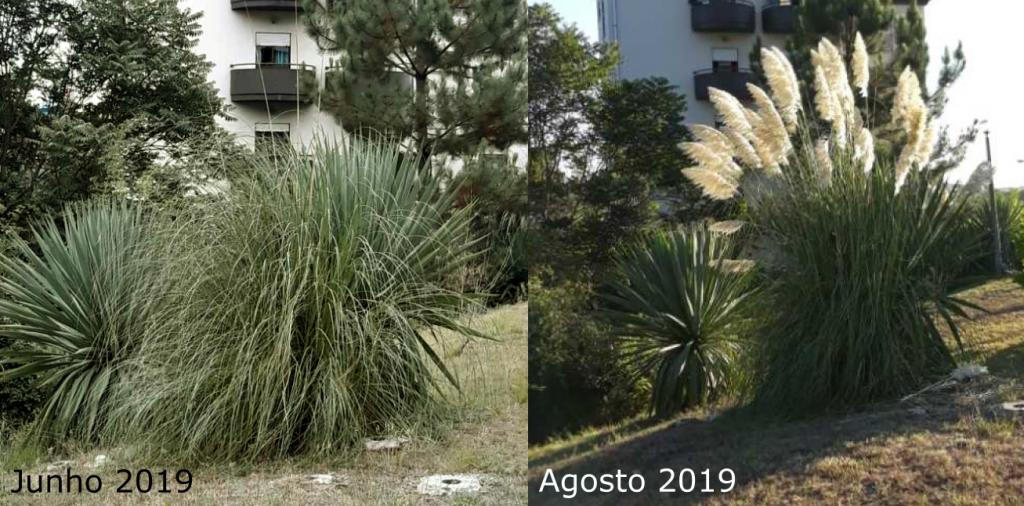 Exemplo de fotografias da mesma planta em 2 meses diferentes.
